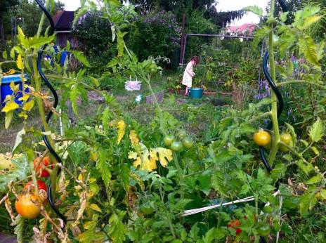 Jardins familiaux on ignore tout de la qualit des sols et des l gumes rue89 strasbourg for Jardin familiaux