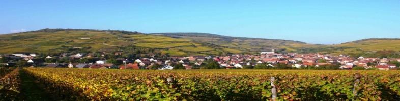 Le vignoble de Westhalten (Photo Bestheim)