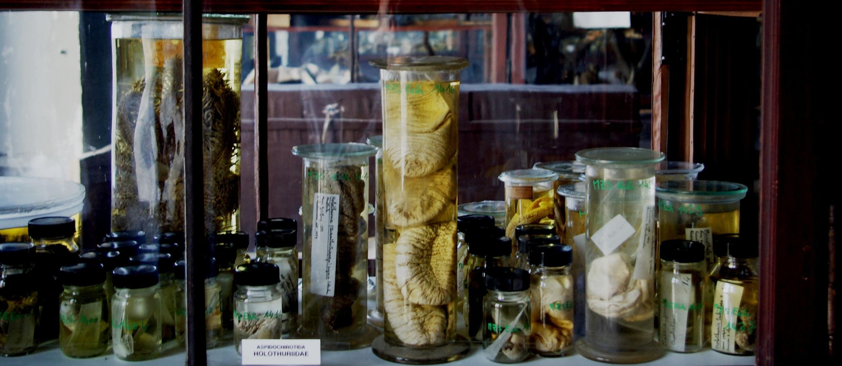 Dans les entrailles du Musée zoologique, collections en sursis
