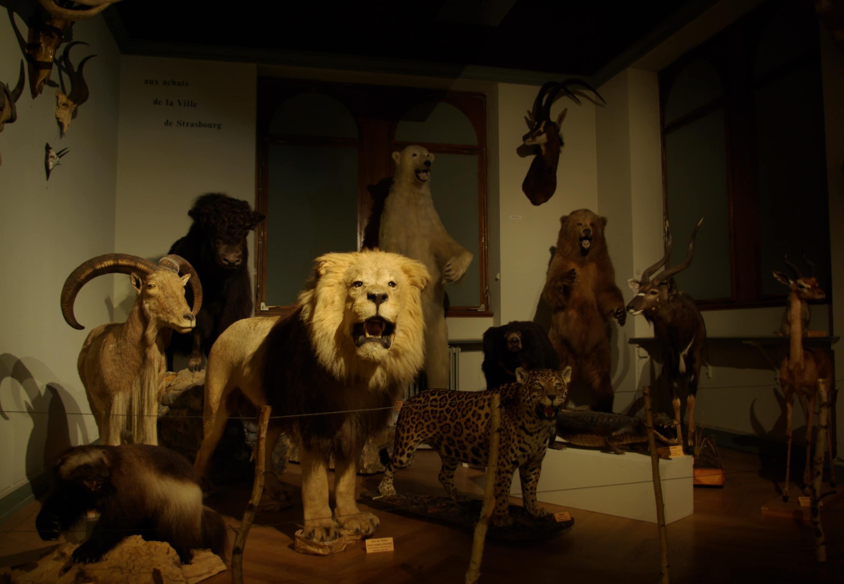 Visitez les coulisses secrètes du musée zoologique de Strasbourg