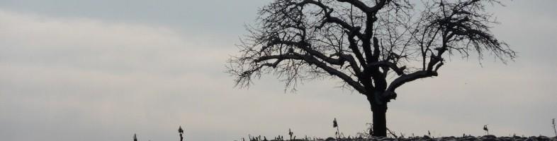 arbre_vie_une