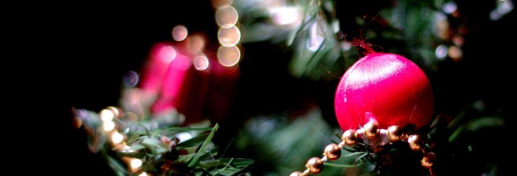 Petit guide à l'usage de ceux qui cherchent encore le bon sapin de Noël