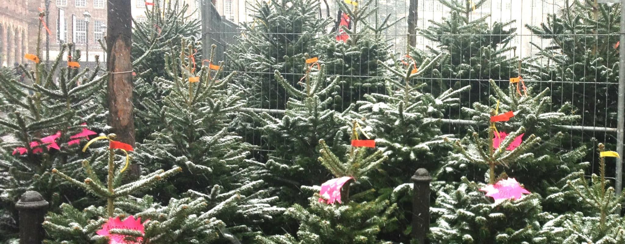 Où et quand se débarrasser de son sapin de Noël à Strasbourg