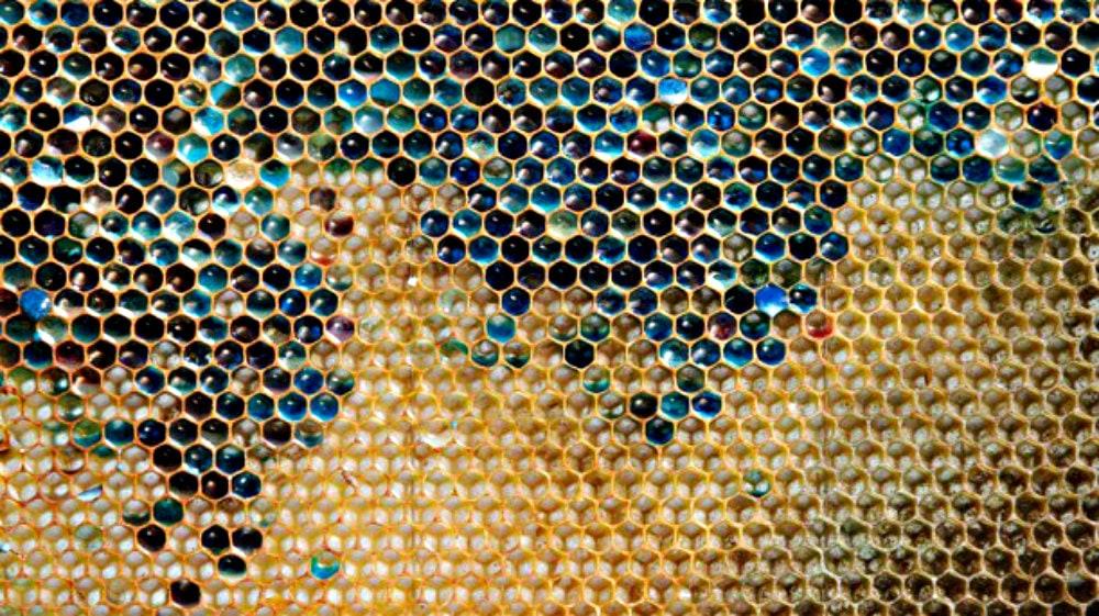 Mars soupçonné d'être à l'origine d'une pollution du miel à Ribeauvillé