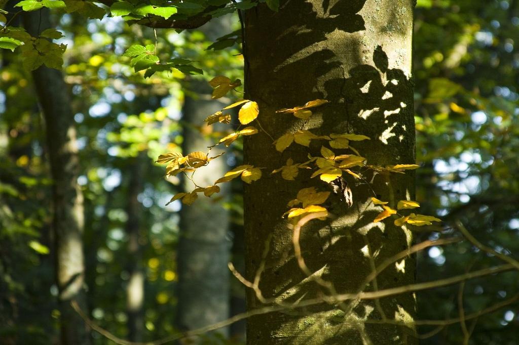 Centrales biomasse : les ressources alsaciennes n'y suffiront pas