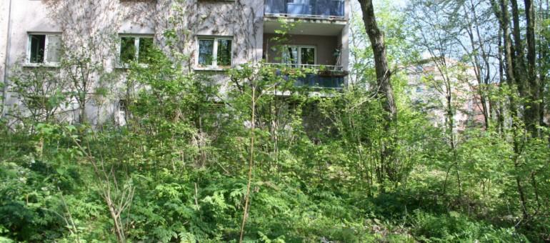 Avec «Strasbourg ça pousse», la Ville veut voir plus de jardiniers en ville