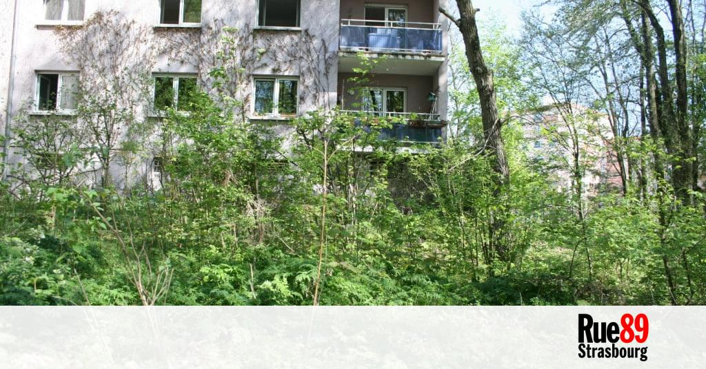 Avec strasbourg a pousse la ville veut voir plus de for Entretien jardin strasbourg