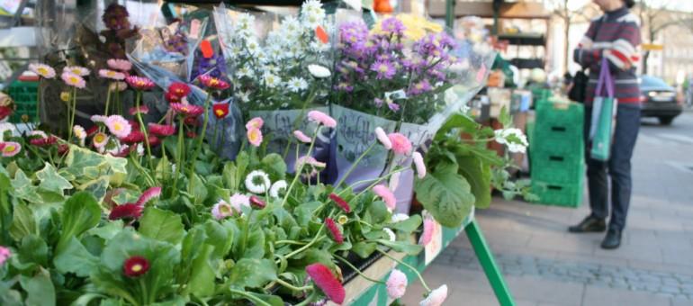 Jardiner en ville : la sève monte à Strasbourg