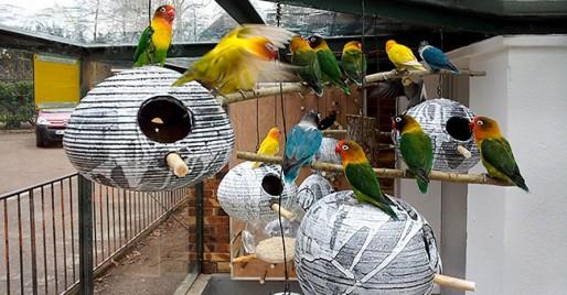 Nichoirs pour inséparables au zoo du parc de l'Orangerie, Strasbourg, printemps 2013. Document remis.