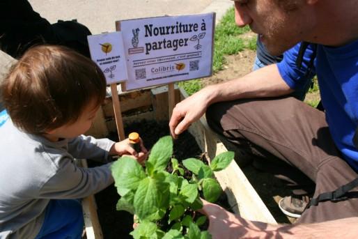 De 11h à 13h ce dimanche, une trentaine de personne a planté des aromates et des légumes dans des bacs (Photo MM / Rue89 Strasbourg)