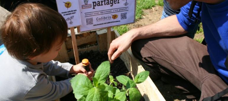 Des légumes ont été plantés en ville… pour tous !