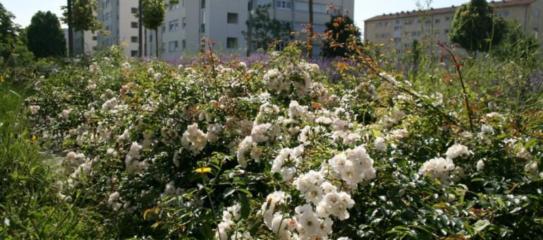 [Diaporama] Aux Poteries, la nature s'accroche malgré l'urbanisation
