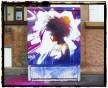 Breezin, place Henri Dunant à Strasbourg (Photo Dan23)