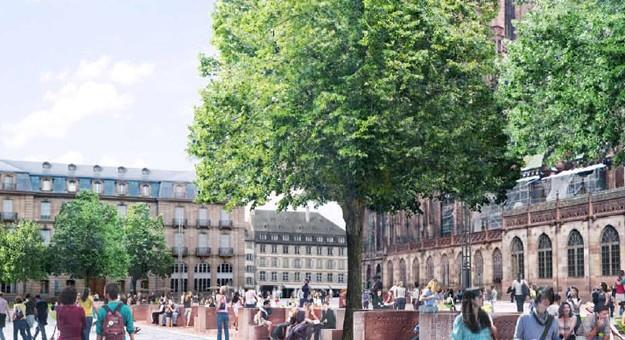 Les arbres de la place du Château, sauvés par la mobilisation