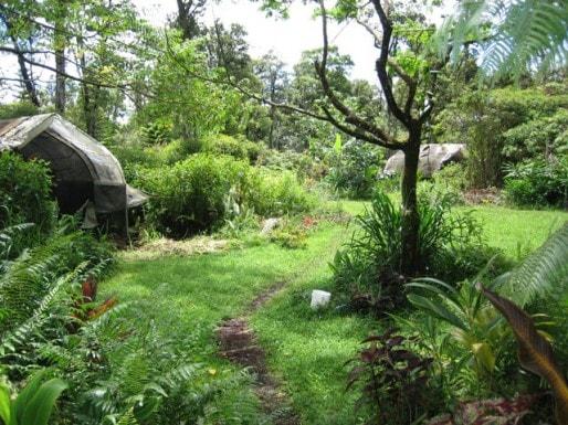 """Un """"jardin-forêt"""" en permaculture, en Nouvelle-Zélande (Document remis)"""