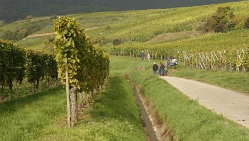 Chemins de vignes près d'Eguisheim (Photo JR / Rue89 Strasbourg)