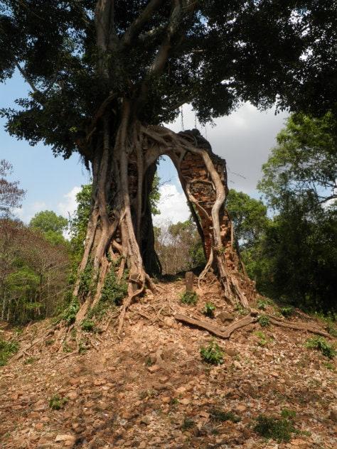 Qui était là en premier ? L'arbre ou la pierre ? (Photo Pierre AUGE / Rue89Strasbourg)
