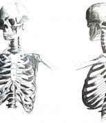 Exposition Anatomies