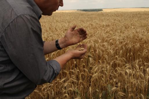 Le blé des agriculteurs moldaves se trouve au-delà de l'enclave. Il est prêt à être moissonné.