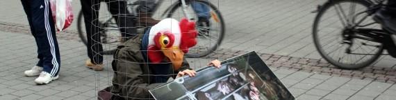 Les poules pondeuses en batterie restent toutes leurs vies dans une petite cage (photo: Animalsace)