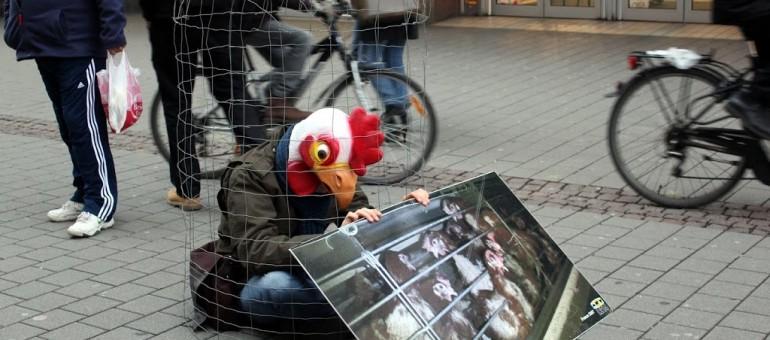 Démonstration d'Animalsace sur l'enfermement des poules jeudi