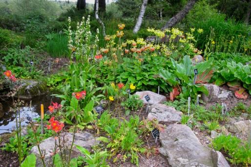 La source au  Jardin d'altitude du Haut-Chitelet