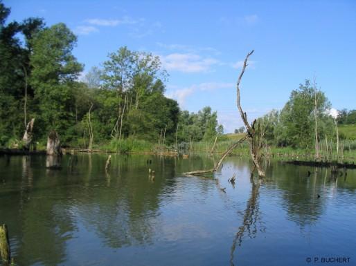 On profite des visites guidées pour mieux comprendre une réserve naturelle nationale. (Ville et Communauté urbaine de Strasbourg/DR)