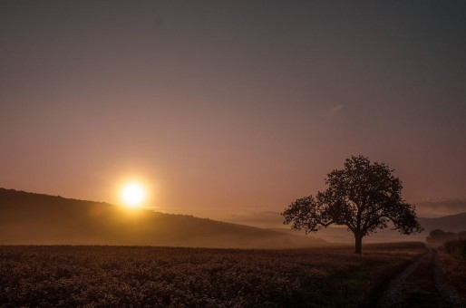 Aube sur les campagnes alsaciennes... (Photo La Belle Lumière / Flickr / cc)