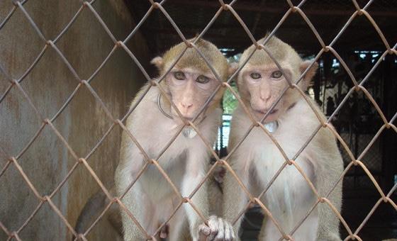 Dimanche, nouvelle mobilisation des opposants au centre de primatologie