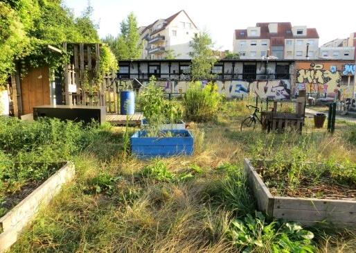 Le jardin partagé du quartier gare souffre de la sécheresse. (Photo Clémence Simon/Rue89 Strasbourg)