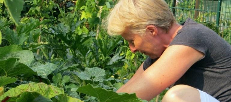 De la théorie à la pratique, les hauts et bas des jardins partagés
