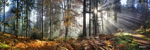Paysages d'Alsace (Crédit F. Zvardon)