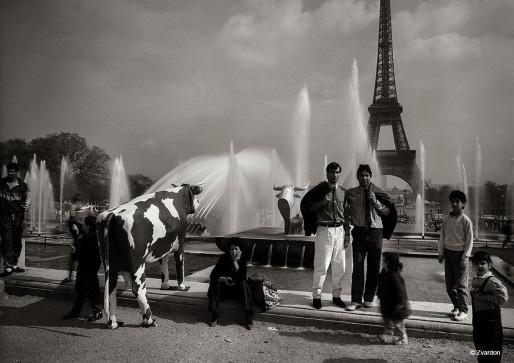 La vache en carton de la marque Mise au green baladée en Europe au début des années 1990 - Ici à Paris (Crédit F. Zvardon)
