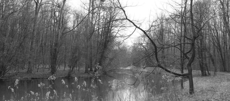 Tribune : Robert Grossmann, «la forêt de la Robertsau est dans un état d'abandon»