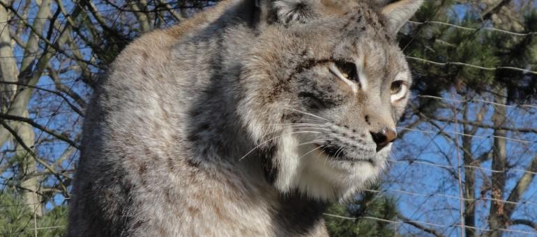 En conflit avec la Ville, le zoo de l'Orangerie proche de la cessation de paiement