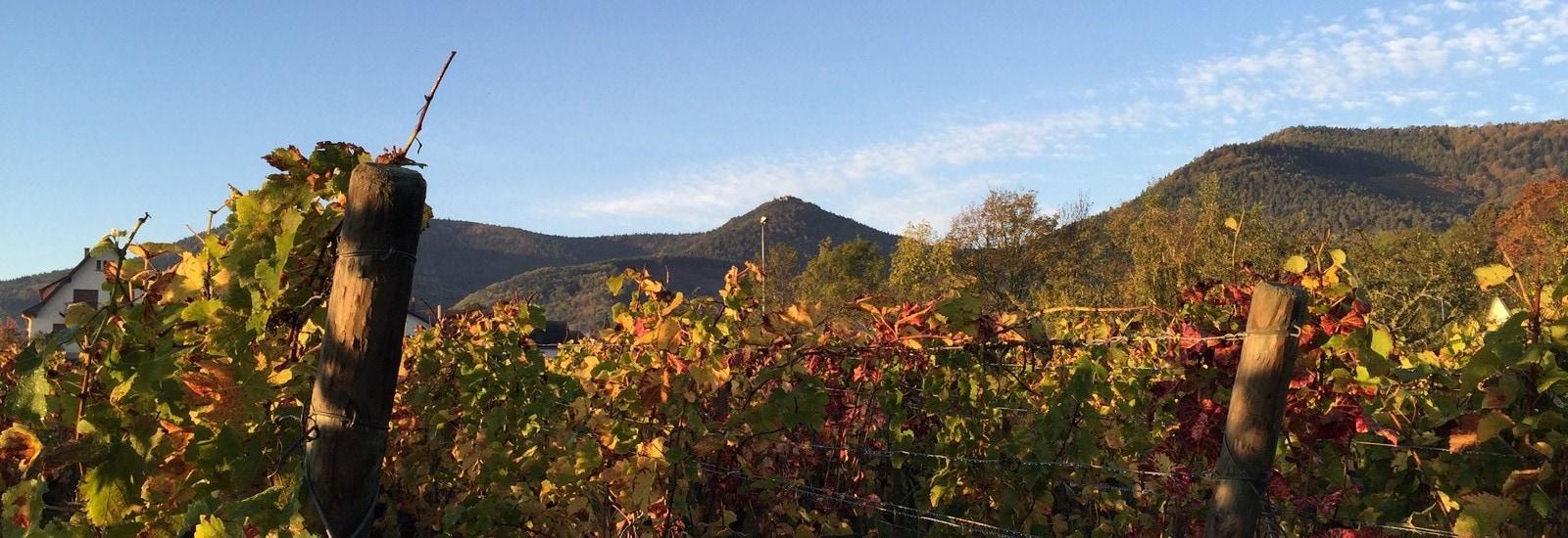 Strasbourgeois et traileur – 2 : le Mont Sainte-Odile
