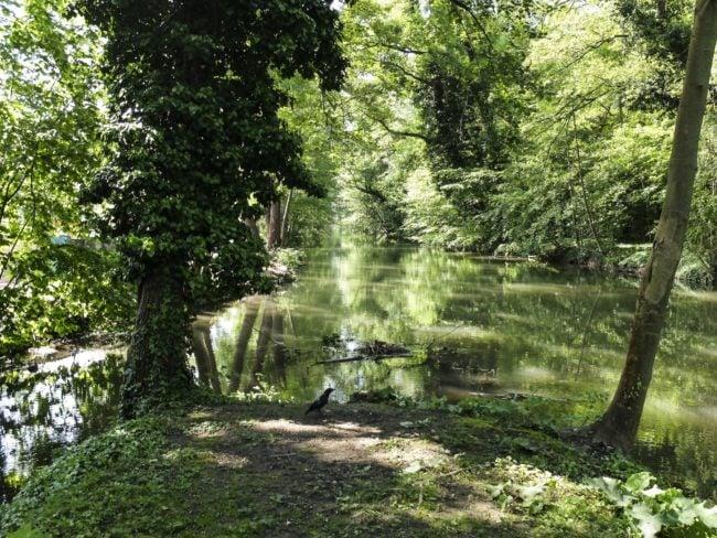 A la confluence du Rhin Tortu et du Ziegelwasser (Photo Pascal Bastien)