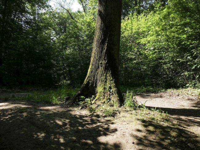 Au chêne pédonculé, prenez à droite (Photo Pascal Bastien)