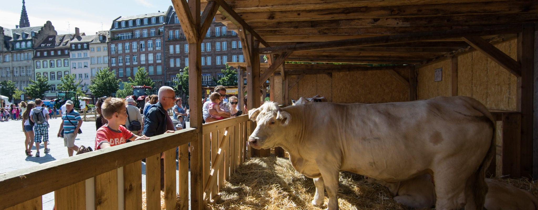 Veaux, vaches, cochons place Kléber à Strasbourg à partir de jeudi
