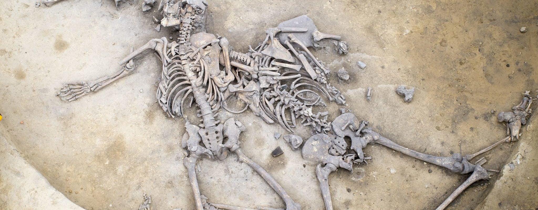 Il y a plus de 6 000 ans, carnage et bain de sang près de Strasbourg