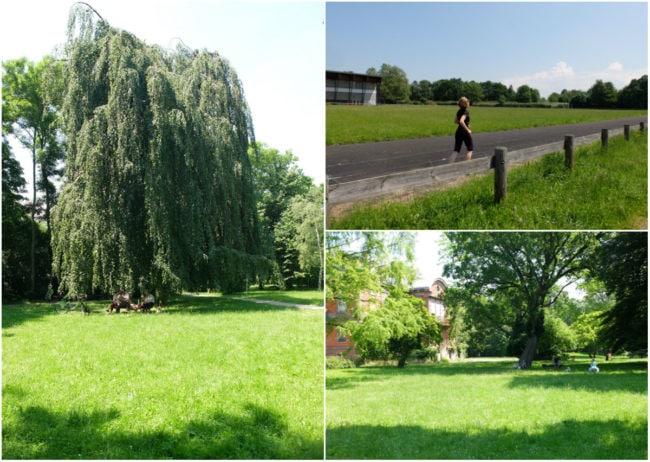 Après un stade, le parc Albert-Schweitzer - A noter que l'arbre qui apparaît sur la photo de gauche a été abattu le lendemain de la prise de vue (Photos MM / Rue89 Strasbourg)