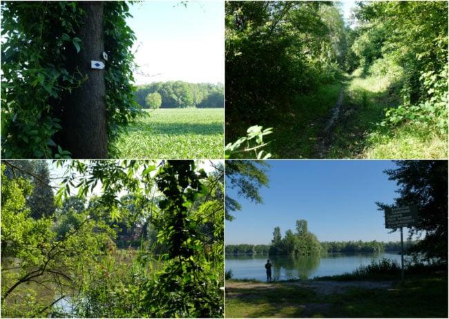 Autour de l'étang de la Vogelau, suivez le balisage du Club Vosgien (Photos MM / Rue89 Strasbourg)