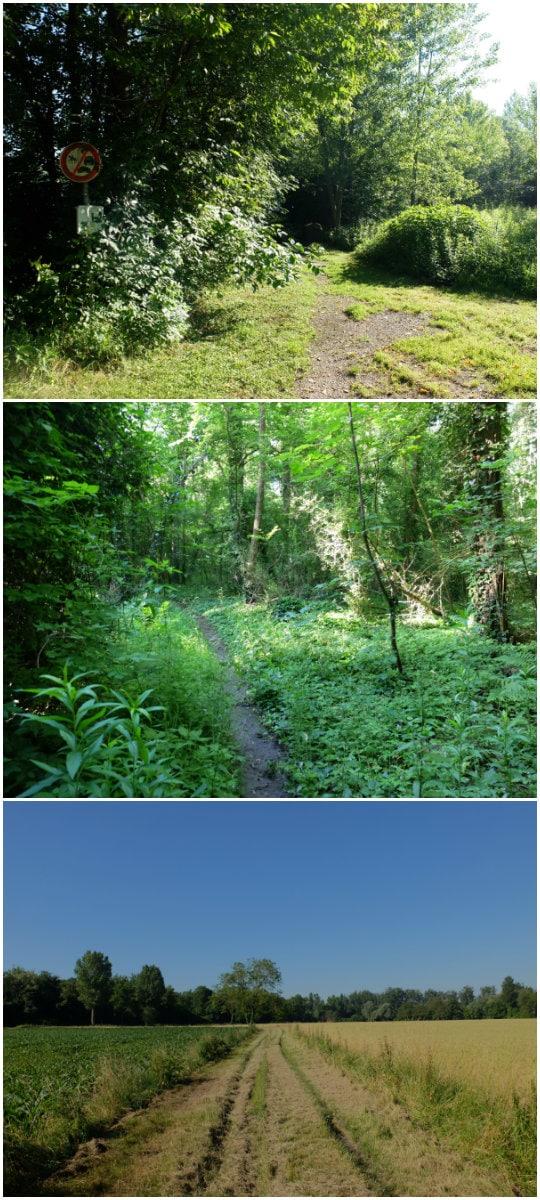 La forêt de la Grossau, entrée, sentiers et sortie (Photos MM / Rue89 Strasbourg)