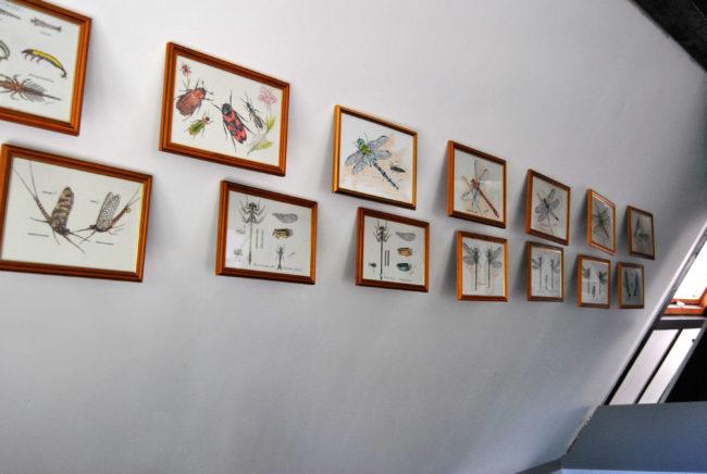 Au mur, les croquis de Hervé Bub décorent le chalet de pêche. (Photo: BB/ Rue89 Strasbourg)