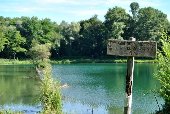 De la verdure, de la nature et encore de la verdure à l'étang du Rohrkopf. (Photo: BB/ Rue89Strasbourg)