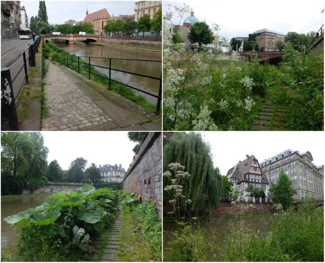 Le long du canal des Faux-Remparts, au nord de l'ellipse insulaire (Photos MM / Rue89 Strasbourg)