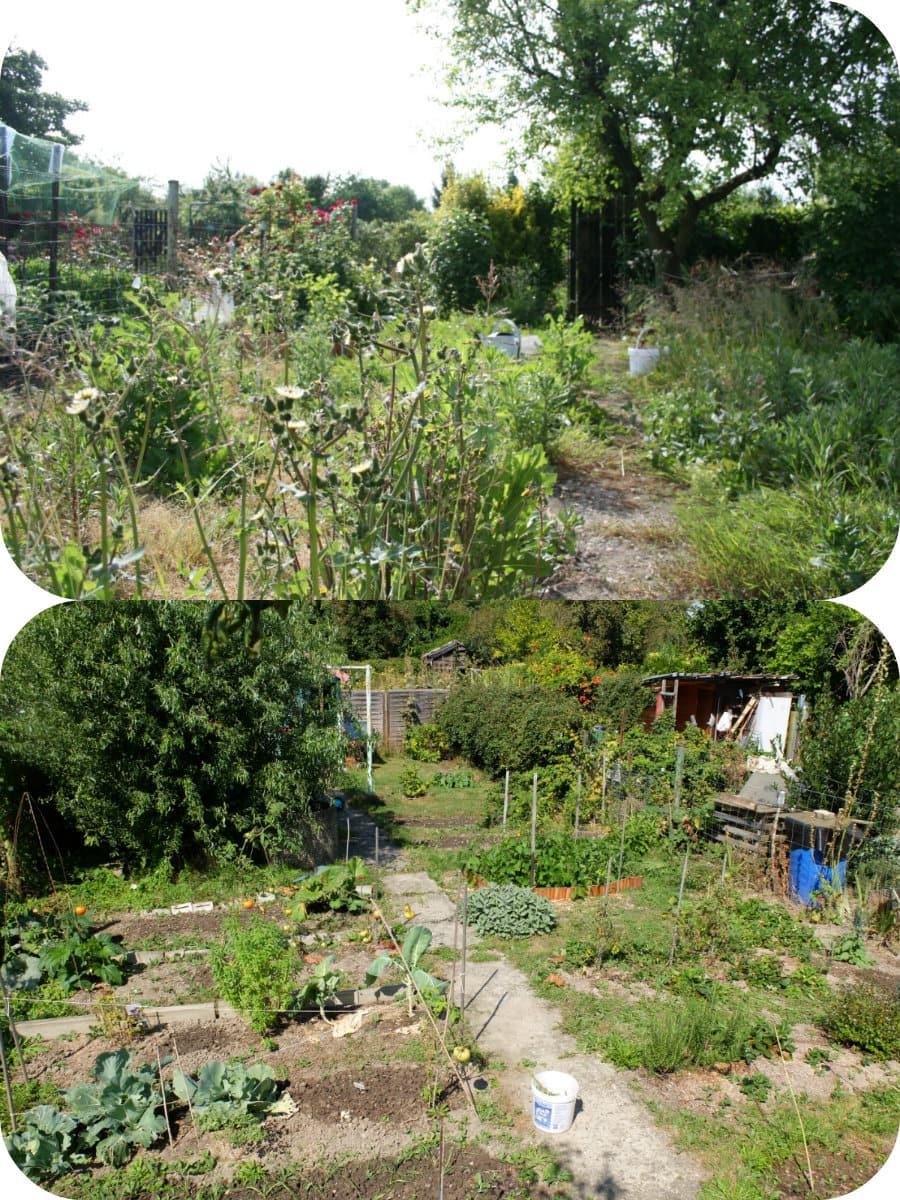 Stunning grand jardin en friche images design trends for Entretien jardin strasbourg