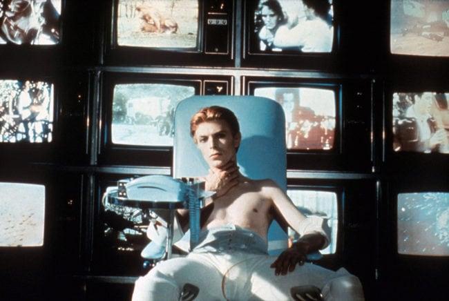 Bowie à la fraiche (Copyright Tamasa Distribution)
