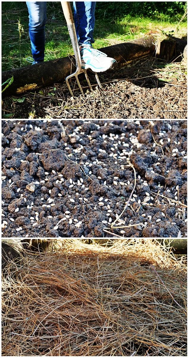 Trois étapes avant l'hiver : décompacter, semer et recouvrir (Photos MM / Rue89 Strasbourg)