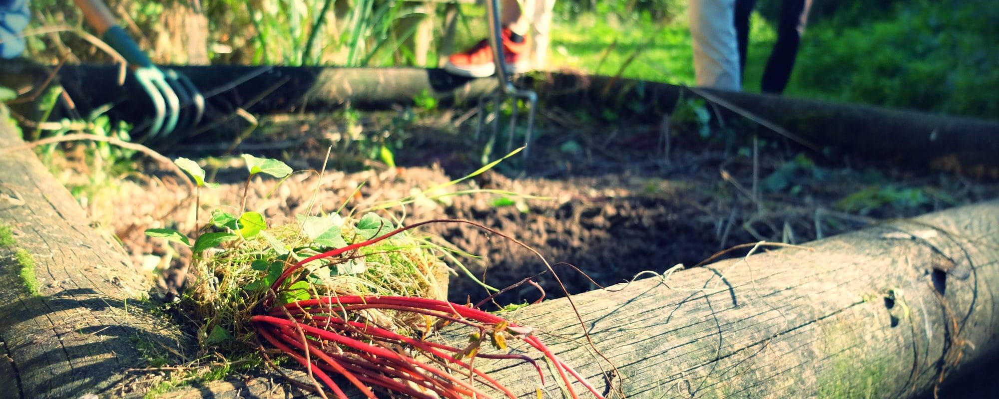 Jardiner pour les nuls : préparer la terre pour l'hiver
